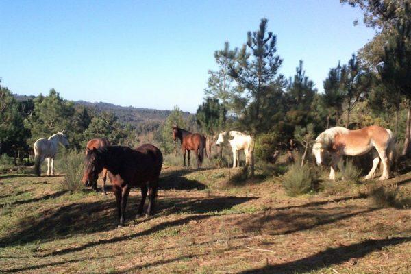 all-horses1