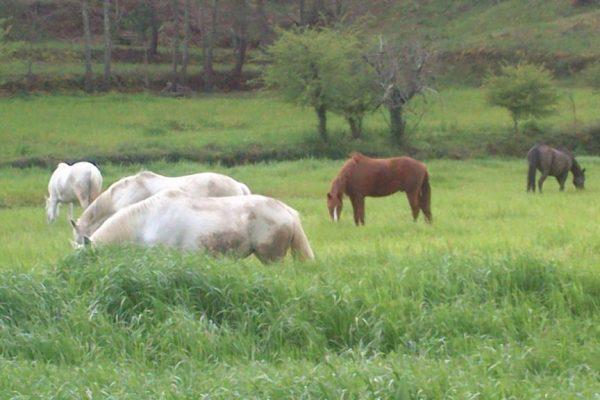 all-horses51