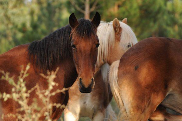 Horses Portugal