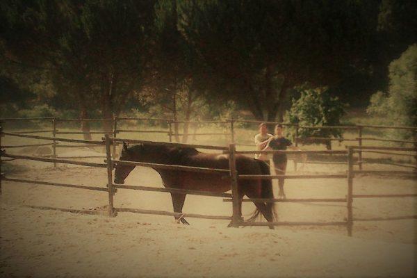 Horsemanship Portugal